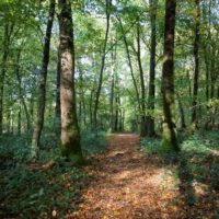 Forêt de Thelle